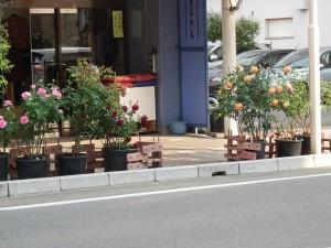 伊那街道初夏の飲み歩き